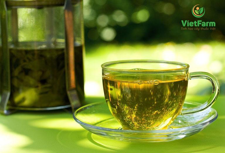Dùng trà mã đề kết hợp với cam thảo dùng chữa ho hiệu quả