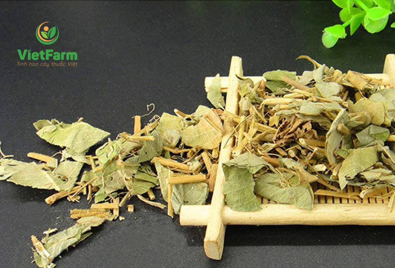 Kim tiền thảo khô được sử dụng phổ biến