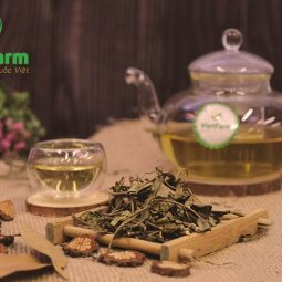 Dùng dây thìa canh khô pha trà để chữa bệnh