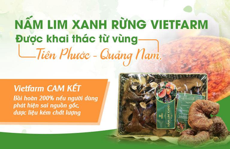 Nấm lim xanh rừng được Vietfarm cam kết khai thác chính gốc Quảng Nam