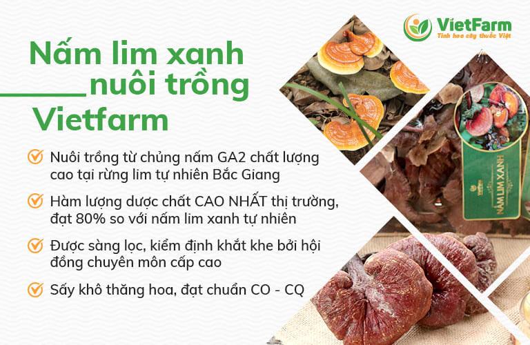 Nấm lim xanh do Vietfarm nuôi trồng đạt chuẩn chất lượng, giá thành hợp lý