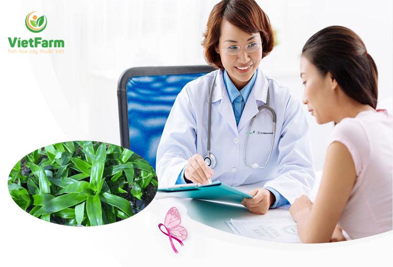 Sử dụng bài thuốc từ cây lược vàng cần tuân thủ chỉ định của bác sĩ
