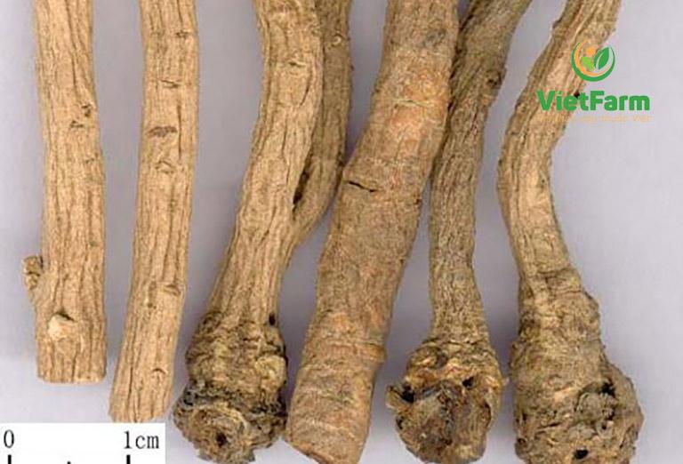 Bộ phận để bào chế dược liệu là rễ cây