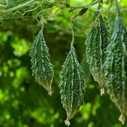 Chú phòng ngừa sâu bệnh để cây có thể sinh trưởng khỏe mạnh