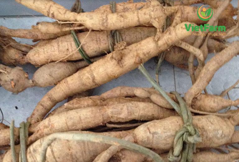 Chọn mua cát sâm loại I chất lượng cao tại Vietfarm