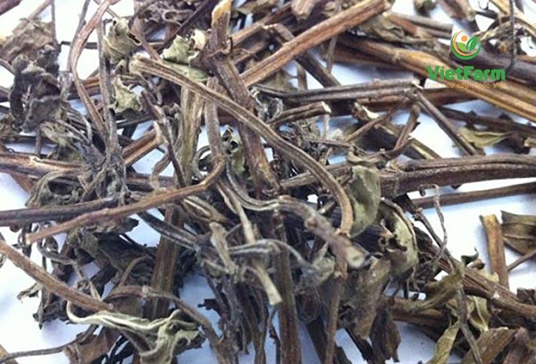 Dược liệu bạc hà được sấy khô từ cây bạc hà tươi