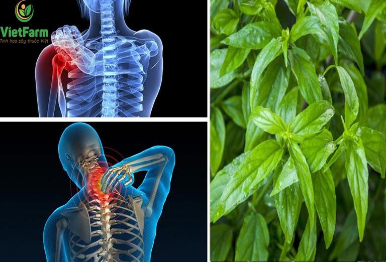 Bài thuốc cây bìm bịp chữa đau nhức xương khớp