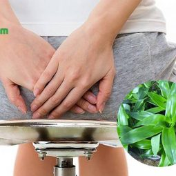 Cây lược vàng có tác dụng chữa bệnh trĩ hiệu quả