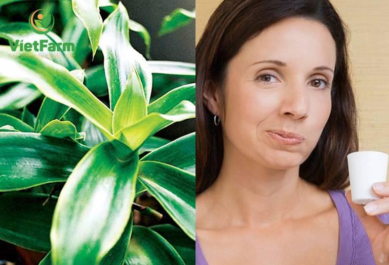 Uống nước cây lược vàng để chữa ung thư vòm họng