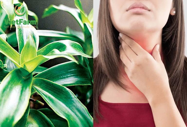 Tham khảo ý kiến bác sĩ trước khi dùng cây lược vàng chữa ung thư vòm họng