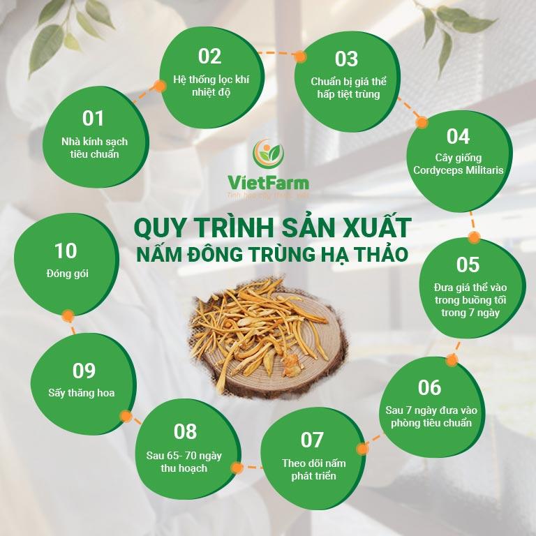 Quy trình sản xuất nấm Đông trùng hạ thảo Vietfarm