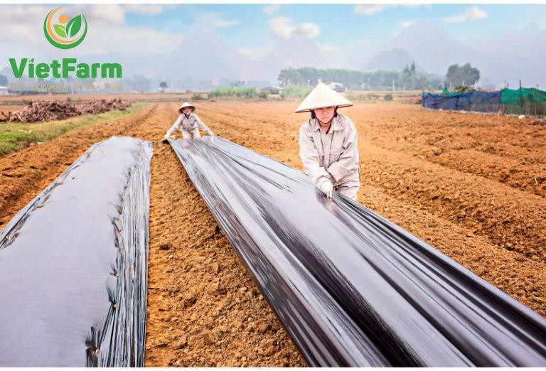 Đất trồng cà gai leo nên là đất tơi xốp để đem lại hiệu quả tốt nhất