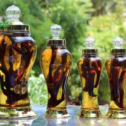 Nhung hươu ngâm rượu mang nhiều tác dụng tốt cho sức khỏe