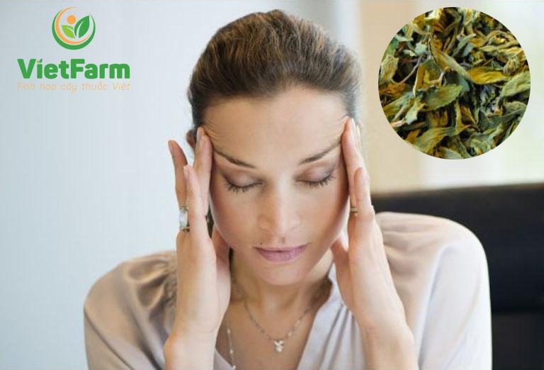 Nước lá sen khô giúp hỗ trợ điều trị đau đầu