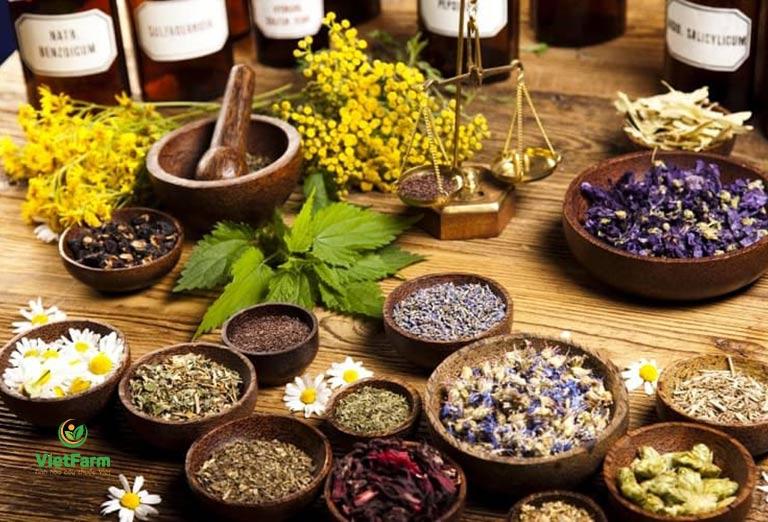 Tán sỏi bằng bài thuốc Đông y từ cây cỏ xước