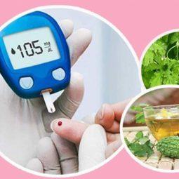 Cách sử dụng khổ qua rừng trị tiểu đường hiệu quả