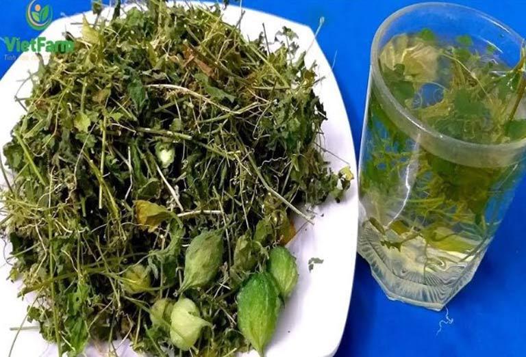 Uống trà khổ qua rừng chữa bệnh tiểu đường