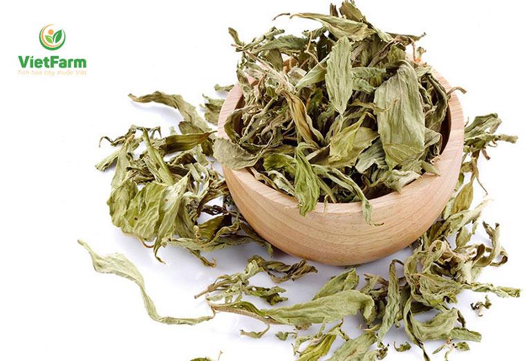 Thành phần cỏ ngọt trong ngũ vị danh trà