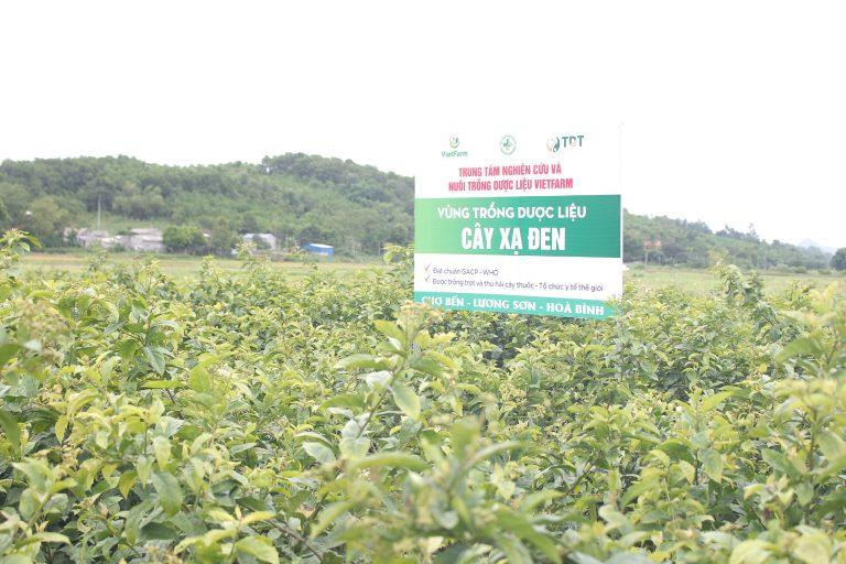 Vườn trồng dược liệu xạ đen