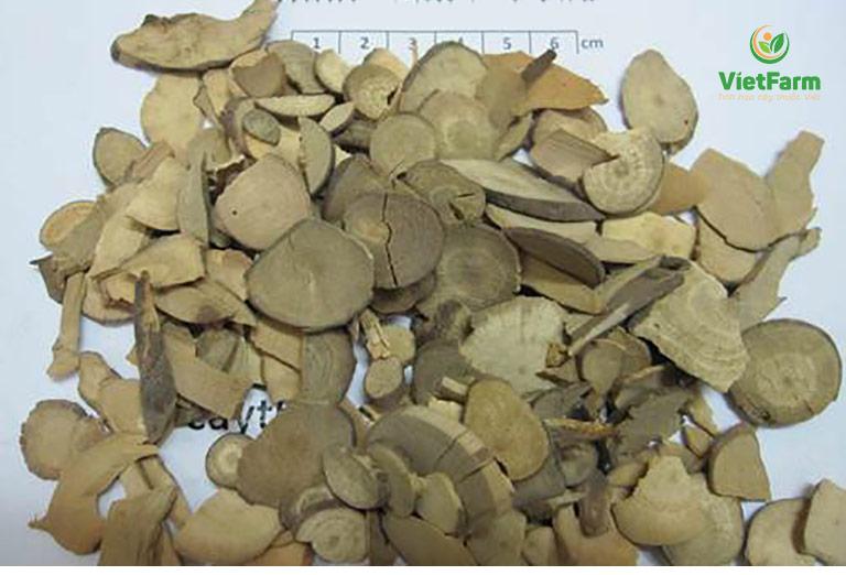 Vị thuốc ô dược được dùng trong bài thuốc Đông Y chữa bệnh thận
