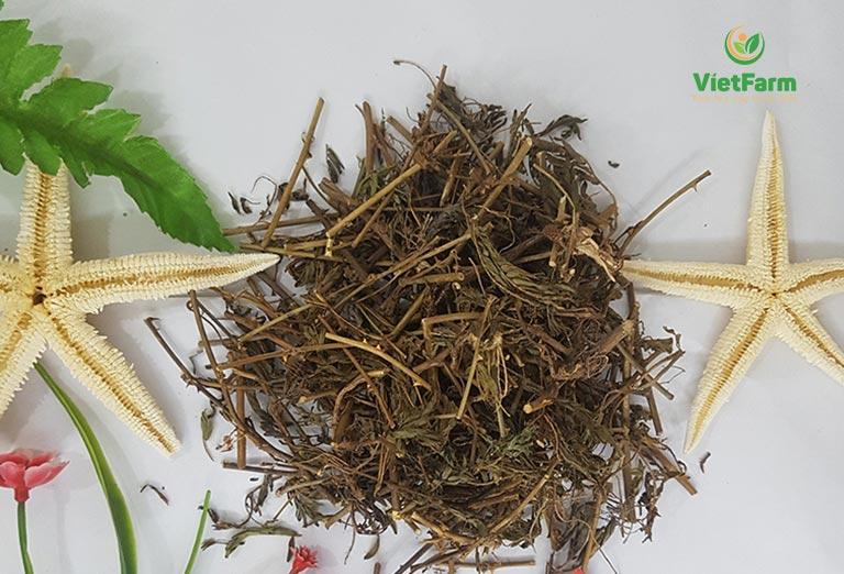 Cách chữa viêm phế quản bằng cây trinh nữ khô