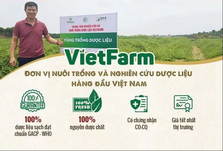 Nguồn cung cứng tiêu chuẩn GACP-WHO tại Vietfarm