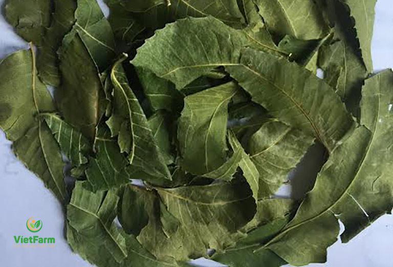 Dược liệu lá neem Ấn Độ chất lượng cao đạt chuẩn GACP tại Vietfarm