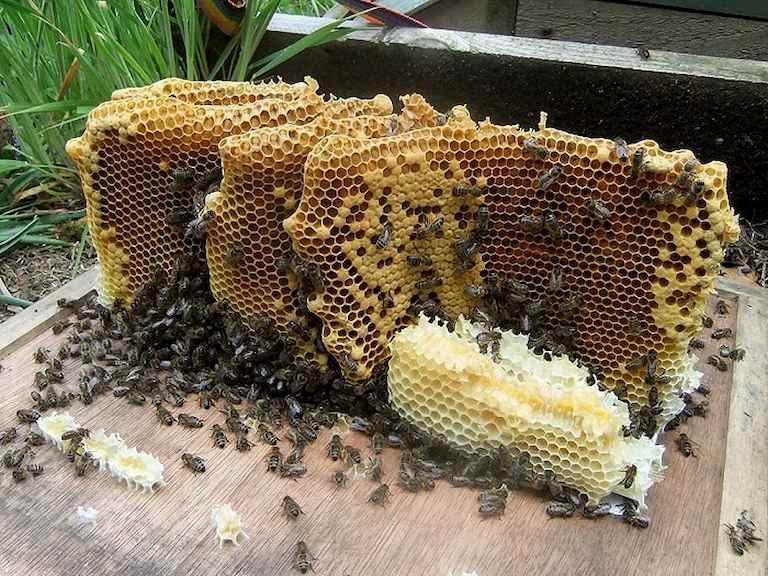 Dùng sáp ong từ 3 - 5 ngày các triệu chứng viêm không suy giảm cần đến ngay cơ sở y tế để được tư vấn điều trị