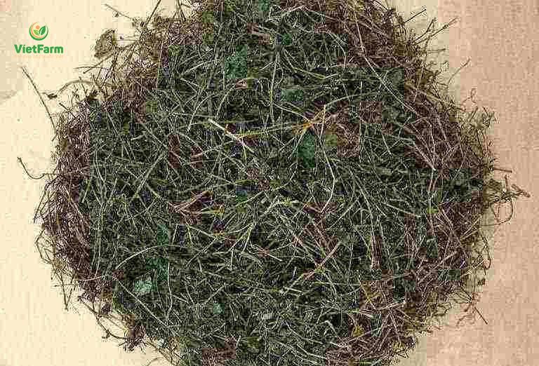Dược liệu sau khi thu hoạch đem phơi khô và tán thành bột mịn