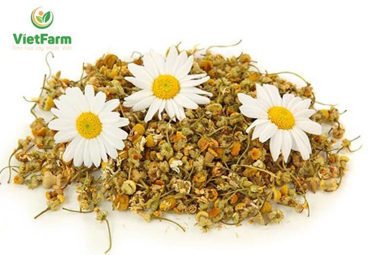 Không nên phơi dược liệu qua quá nhiều nắng, có thể làm mất hương vị và khiến cánh hoa bị biến màu