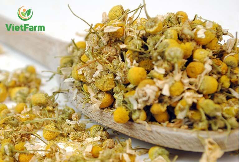Cúc hoa được sử dụng nhiều trong các bài thuốc Đông y, hỗ trợ tích cực trong quá trình điều trị nhiều bệnh lý