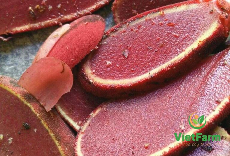 Nấm ngọc cẩu tươi ngâm rượu cải thiện sinh lý hiệu quả