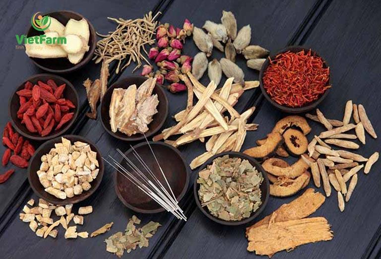 Một số bài thuốc chữa bệnh chiết xuất từ tầm gửi cây gạo