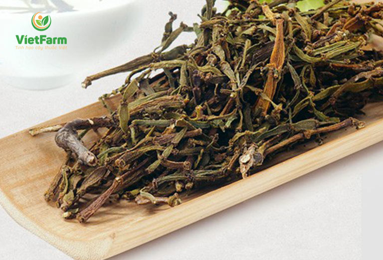 Uống trà tầm gửi cây gạo mỗi ngày giúp thanh nhiệt, giải độc gan rất tốt