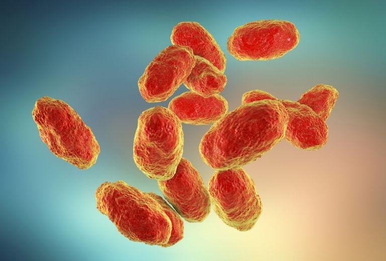 Vi khuẩn Haemophilus Influenzae là nguyên nhân gây bệnh