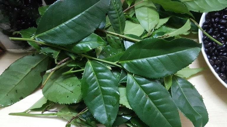Sử dụng lá trà xanh thường xuyên sẽ giúp người bệnh cải thiện triệu chứng viêm xoang mũi