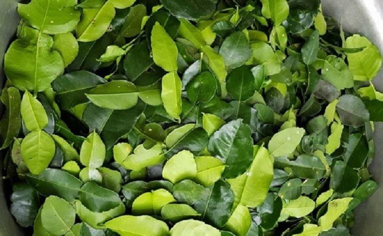 Lá chanh chứa nhiều tinh dầu, có khả năng đào thải độc tố
