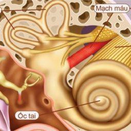 u dây thần kinh số 8