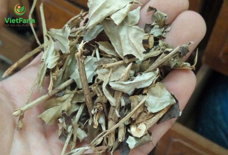 Dược liệu cho lá có tác dụng hỗ trợ điều trị bệnh lý dạ dày