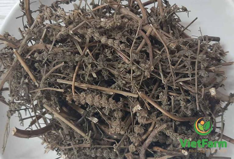 Dược liệu thu được sau khi phơi khô để sử dụng trong các bài thuốc