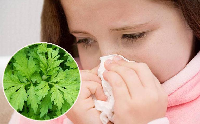 Chữa viêm mũi dị ứng bằng lá ngải cứu